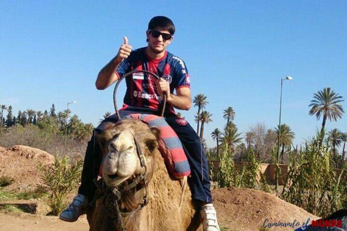 Camello en Marruecos, infaltable para viajar a marrakech