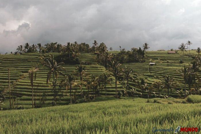 Arrozales en Bali