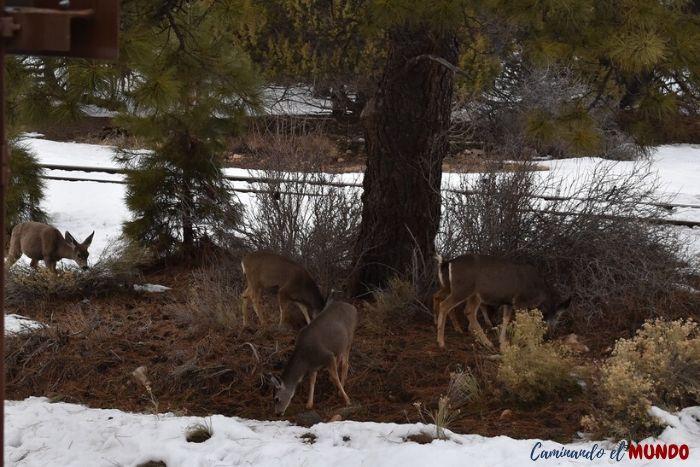 Alces y ciervos en el Gran Cañón