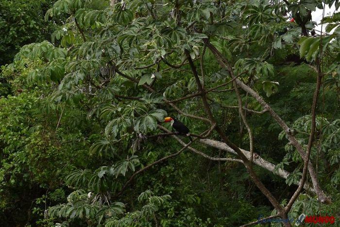 Tucán disfrutando de la naturaleza en nuestra visita a las Cataratas
