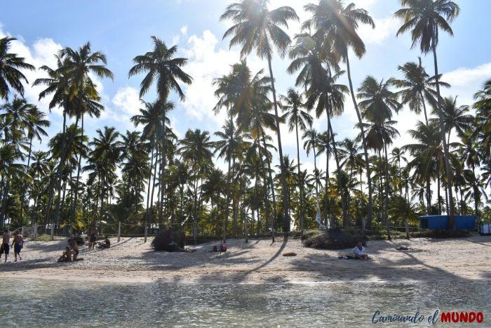 Palmeras en Praia Dos Carneiros