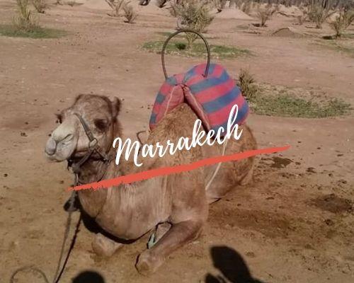 Nuestros viajes por Marrakech
