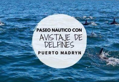 Avistaje de delfines en Puerto Madryn, Chubut