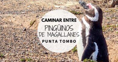 Visitar Punta Tombo