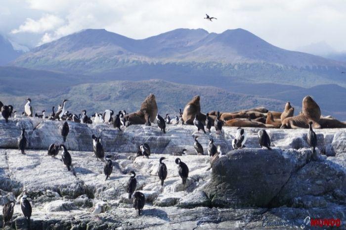 Lobos marinos en la Isla Alicia